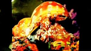 Micronesian Snail 2